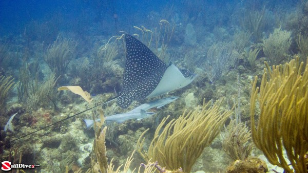 160830---eagle-ray-img_1501_lr_canon-powershot-g15.jpg