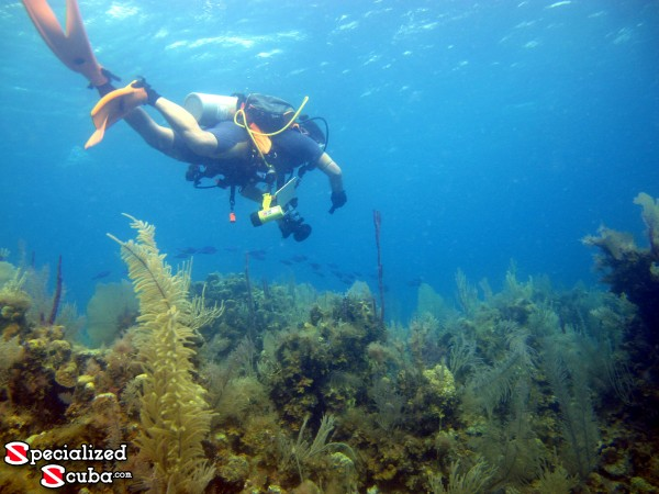 Belize, SCUBA Diver, Top of Wall