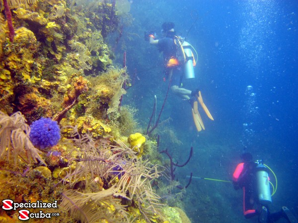 Belize, reef wall, SCUBA Diver