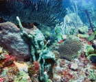 Gorgonians and colorful corals