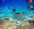 Large school of Brown Chromis