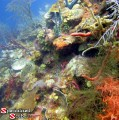 Belize, Reef Image, Reef Wall