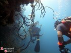 Belize, Reef Image, Reef Wall, SCUBA Diver