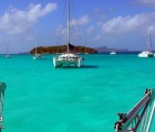Cat in Tobago Cays